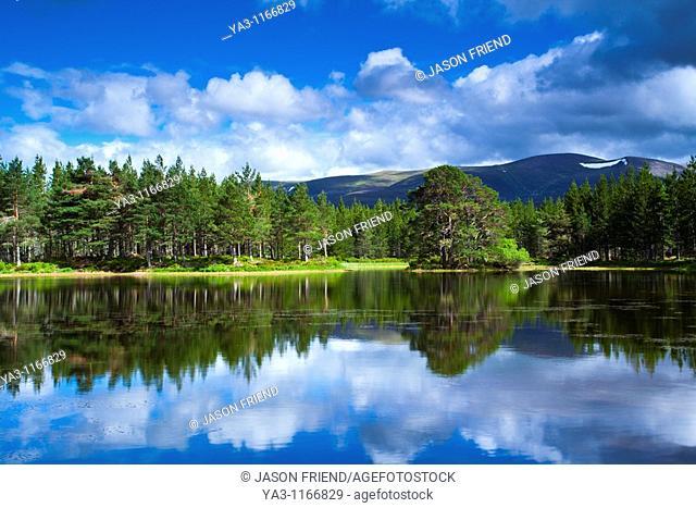 Scotland, Scottish Highlands, Cairngorms National Park  Native woodland of the Rothiemurchus Estate and Lochan nan Geadas
