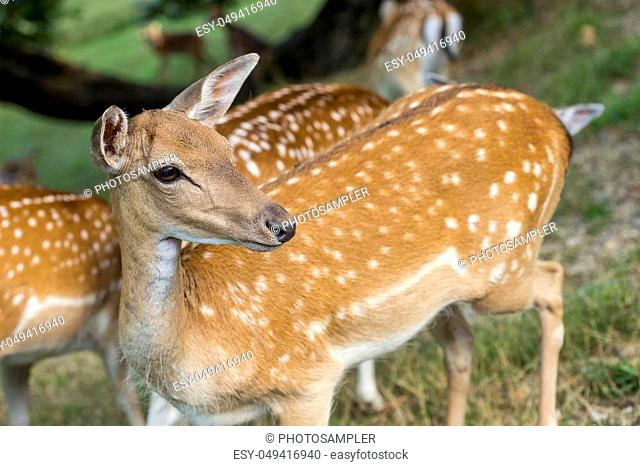 Group of young deers looking around