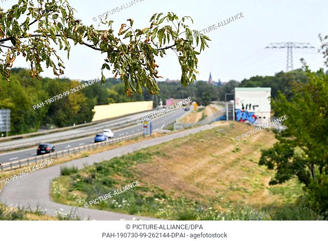 28 July 2019, Saxony-Anhalt, Halle: The long drought has caused the trees and plants on the Gimritzer Dam on the Bundesstraße 80 to suffer and partly dry up