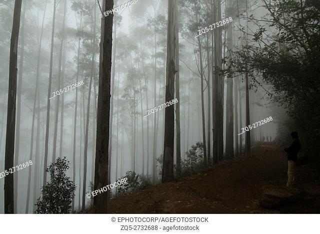 Cloud covered forest of Kodaikanal Kodaikanal, Tamil Nadu