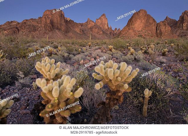 Twilight over Sonoran Desert of Kofa National Wildlife Refuge Arizona