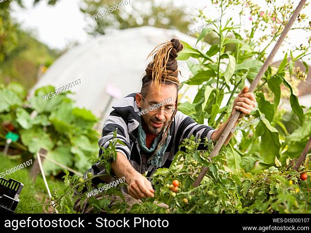 Austria, Schiltern, Alternative gardener at work
