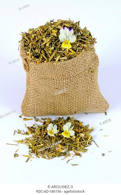 Field Pansy, dried, Viola arvensis, cut out, object