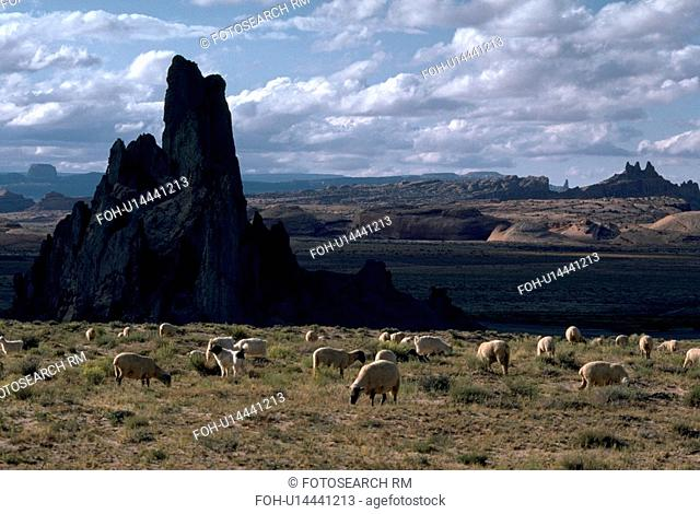 park, monument, national, arizona, valley, sheep