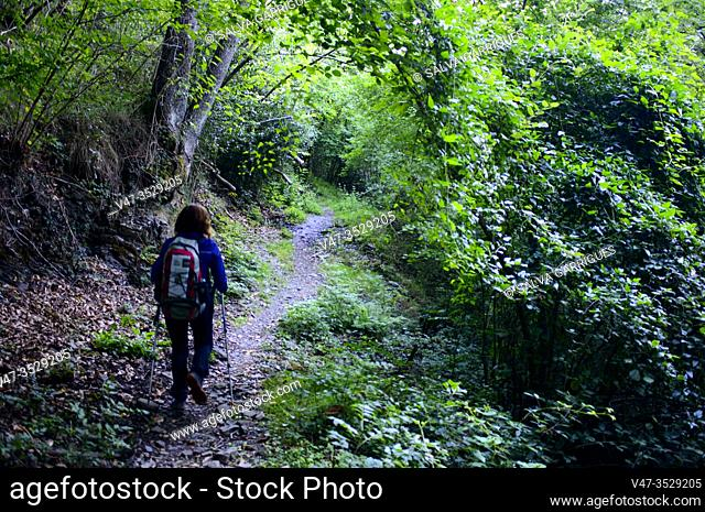 Hiker walking through the Naredo Valley and Mofusu forest, Asturias, Spain