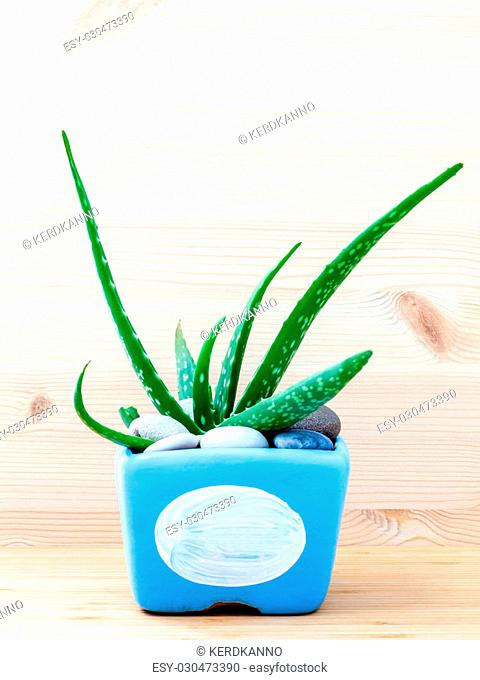 Aloe vera cactus in blue pot on white wooden table