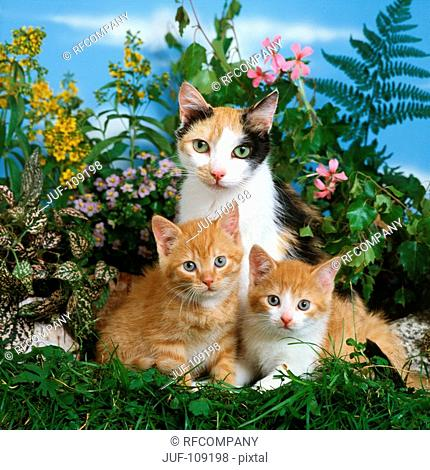 domestic cat with two kittens