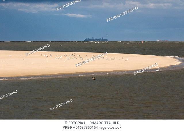 Harbour seal and gulls, Wangerooge East, Wangerooge, Friesland district, Lower Saxony, North Sea, Germany, June 2016 / Seehund und Möwen, Wangerooge Ost