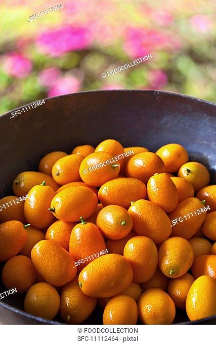 Bowl of Fresh Kumquats