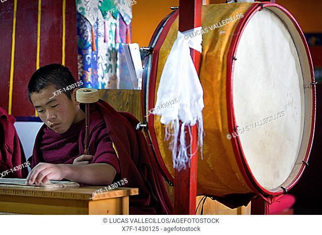 Puja,Monk praying, in Dip Tse Chok Ling Monastery McLeod Ganj, Dharamsala, Himachal Pradesh state, India, Asia