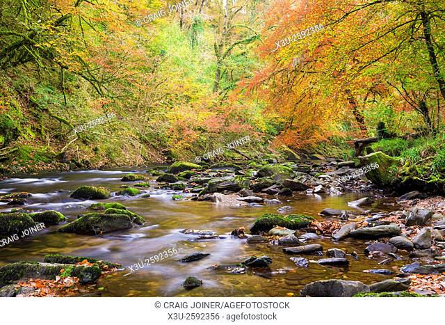 Autumn colours surround the River Barle near Tarr Steps. Exmoor National Park, Somerset, England