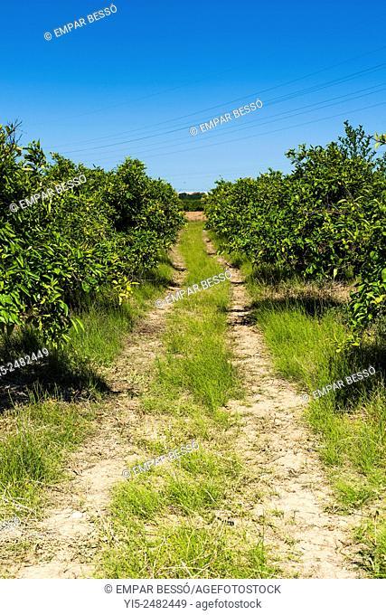 Path. Field. Huerta Valencia. Spain
