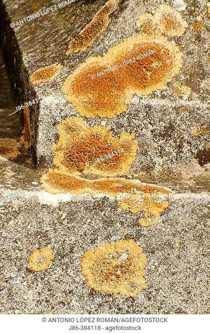 Lichen (Caloplaca sp.) on sculpture