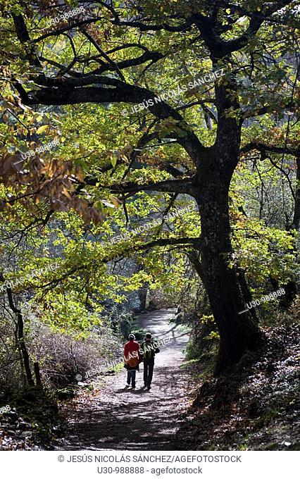 Walkers on the route of Camino del Agua, in Las Batuecas-Sierra de Francia Natural Park  Mogarraz  Monforte de la Sierra  Salamanca  Castilla y León  Spain