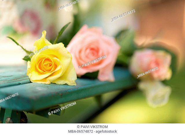 Rose bouquet on a green garden chair, outdoors in the garden