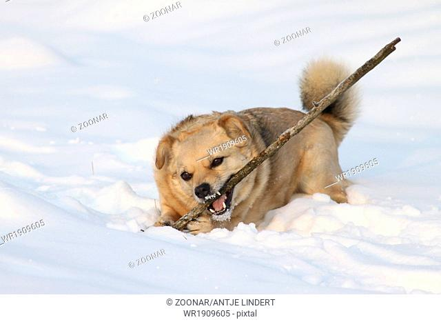 dog playing with a stick in the snow