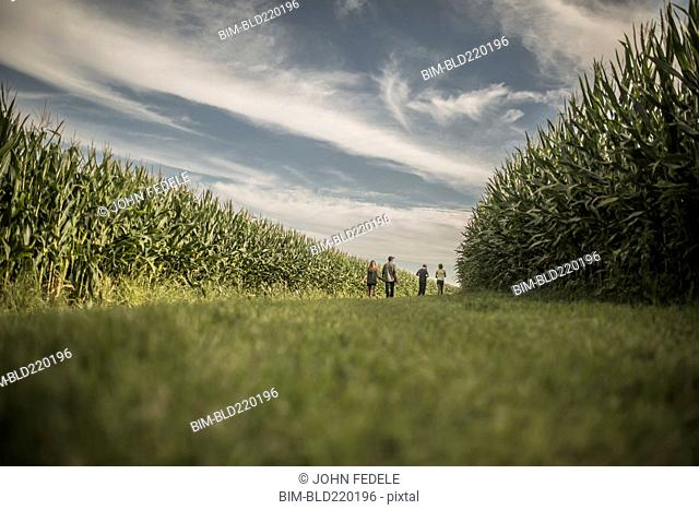 Caucasian family walking in corn field