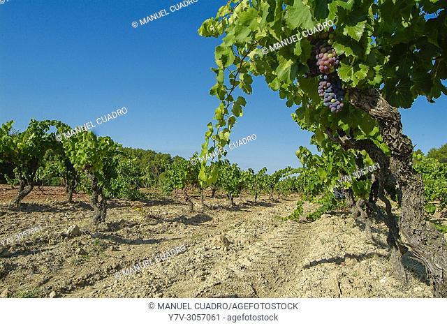 Bodega Can Blau, integrada en Montsant, que es una denominación de origen establecida en 2002 e integrada por los municipios y bodegas que, hasta esa fecha