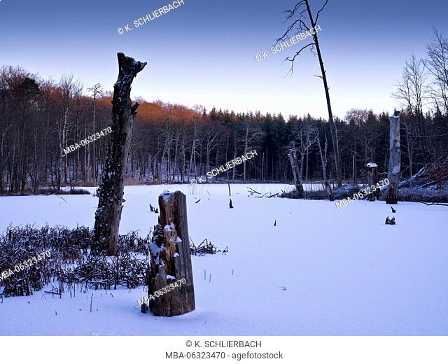 Germany, Mecklenburg-Western Pomerania, Müritz National Park, beech forest Serrahn, UNESCO World Natural Heritage European beech forests, evening mood