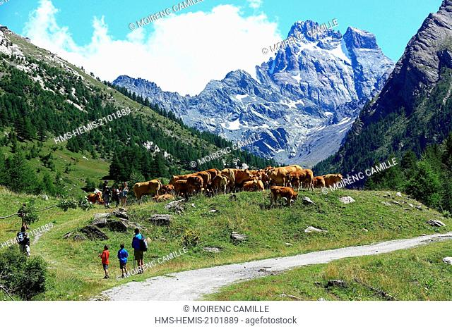 France, Hautes Alpes, regional park of Queyras, Ristolas, hike to the Belvedere Viso