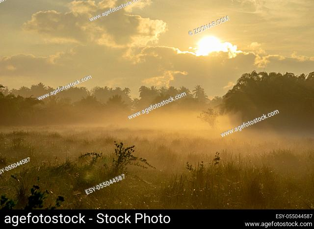 Fog over the grass In the morning Nature along the way in Chumphon Province