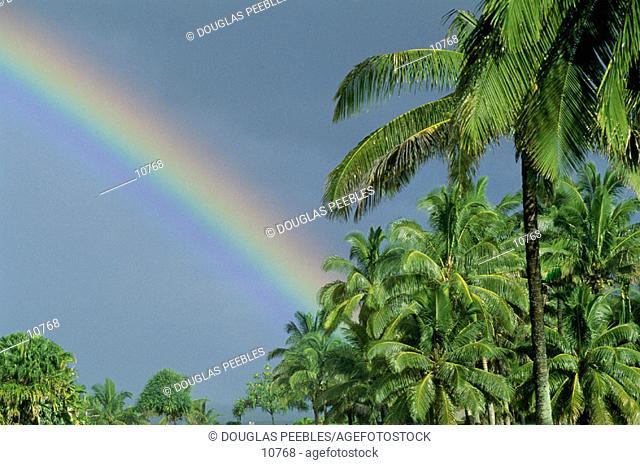 Rainbow with Palm Trees, Hawaii