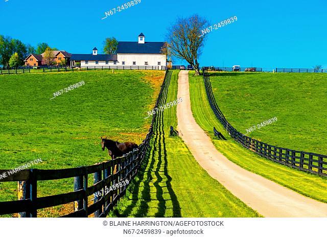 Horse farm outside Lexington, Kentucky USA