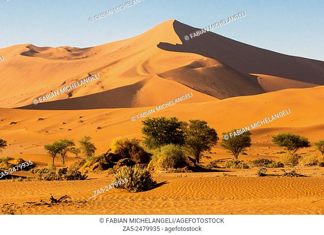 Red sand dunes in the Sossusvlei valley. Namib Naukluft National Park. Namib Desert, Namibia