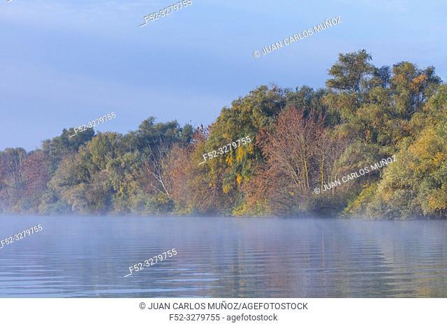 Mist on a shallow channel, Danube Delta, UNESCO WORLD HERITAGE, Tulcea County, Romania, Europe