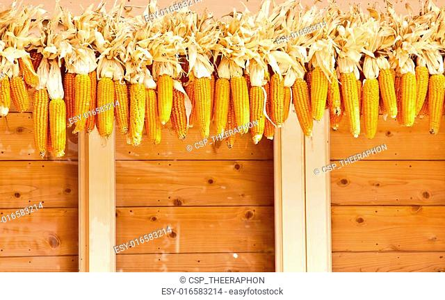Many corn