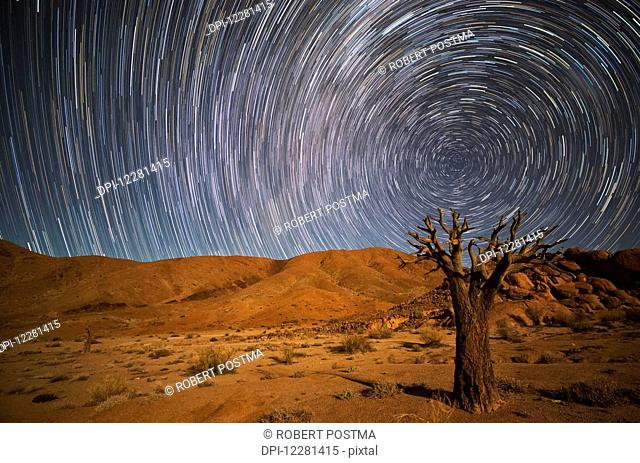 Richtersveld National Park with dead Kookerboom tree and star trails in the night sky; South Africa