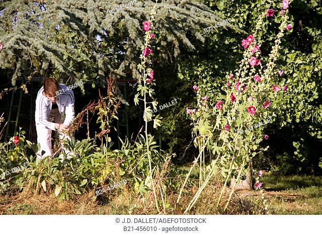 Gardening. Dordogne. France