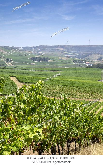 Vineyards in vinho verde wine route, Douro, wine valley, Portugal