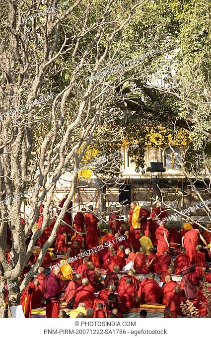 Monks under a tree, Bodhi Tree, Mahabodhi Temple, Bodhgaya, Gaya, Bihar, India