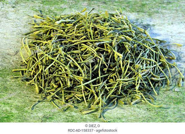 Jin Yin Hua Lonicera caprifolium Lonicera japonica Goat's Leaf Jinyinhua