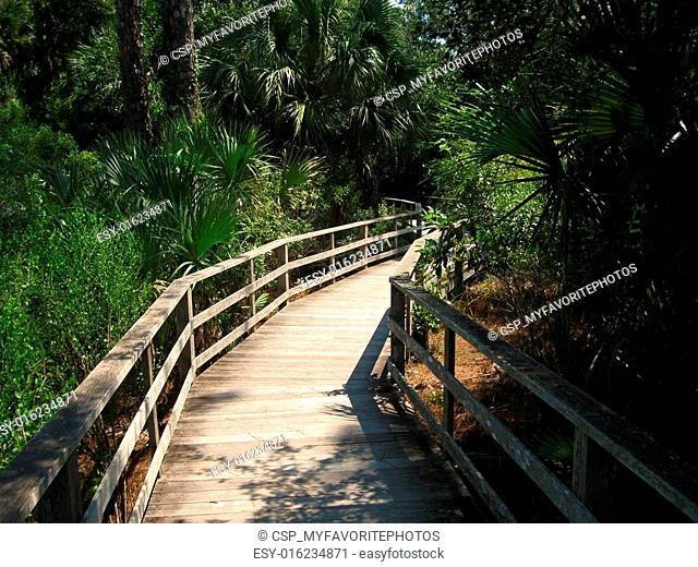 Corkscrew Swamp Sanctuary %u2013 Naples