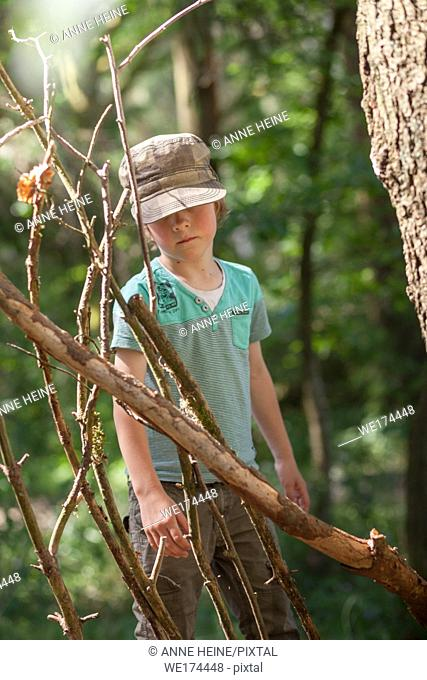 Boy building a hut with sticks in the forest. Warstein, Arnsberger Wald, Sauerland, Germany