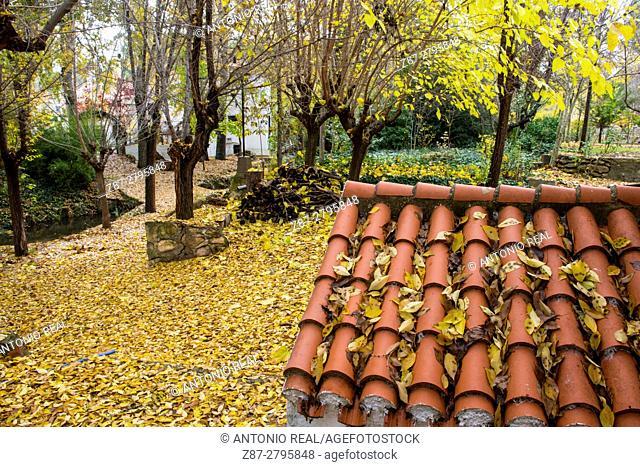 Roof, Rambla de los Molinos in autumn, Almansa, Albacete province, Castilla-La Mancha, Spain