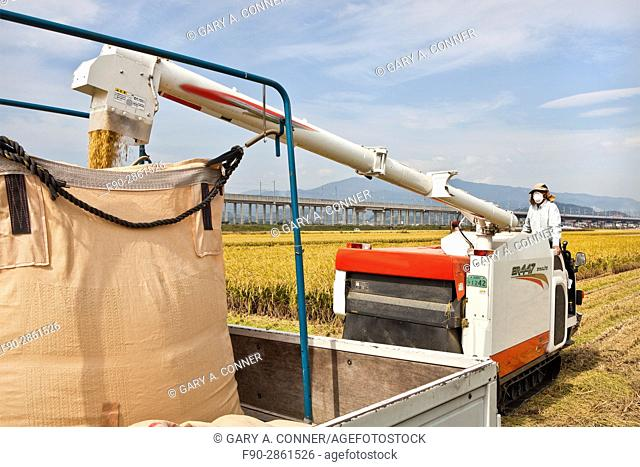 Loading rice from combine in Tosu, Saga, Japan