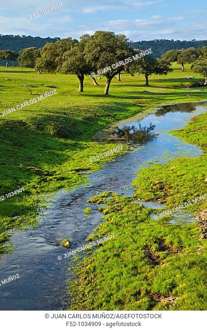 Meadow of Oaks. Sierra de Andújar Natural Park. Jaén province. Andalucía. Spain
