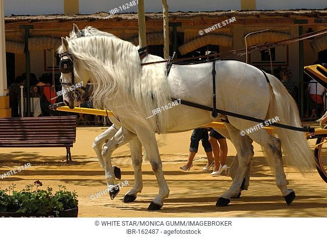 Horse , Feria de Caballo , Jerez de la Frontera , Cadiz , Andalusia , Spain , Europe