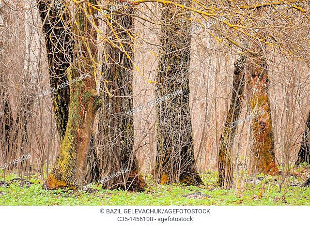 Tree, wood