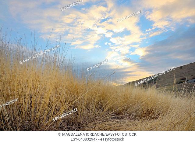 Sunrise and yellow grass on the top of the mountain