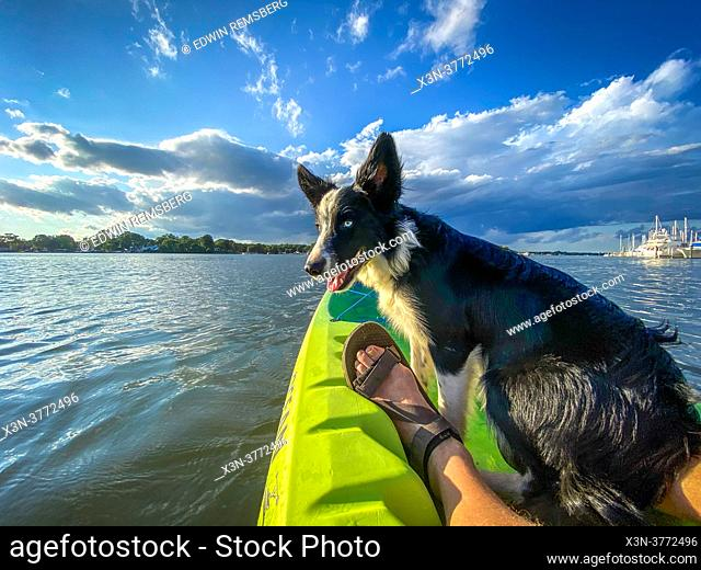 Dog in Kayak Middle River Maryland