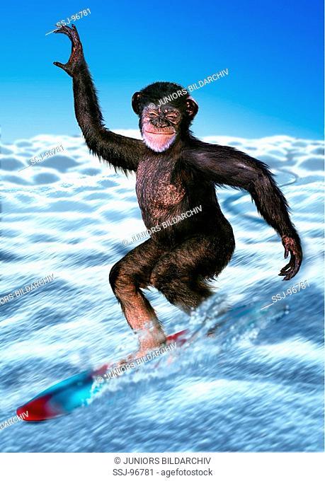 Ape on a snowboard