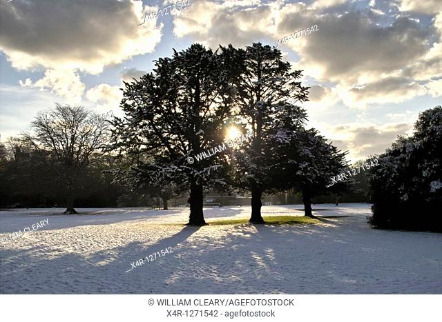 Winter landscape at St  Annes Park, Clontarf, Dublin, Ireland
