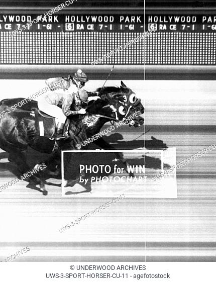 Inglewood, California: 1961.Sirri II on the inside just noses out Chimorro at the finish line in the 6th race at the Hollywood Park racetrack