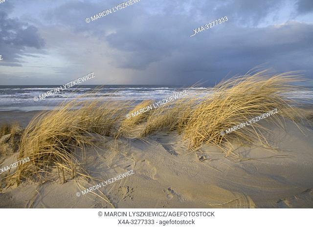 dunes on Wadden Sea coast, Terschelling island, Netherlands