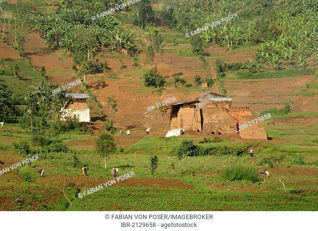Brick factory near the town of Musanze, Ruhengeri, Rwanda, Africa
