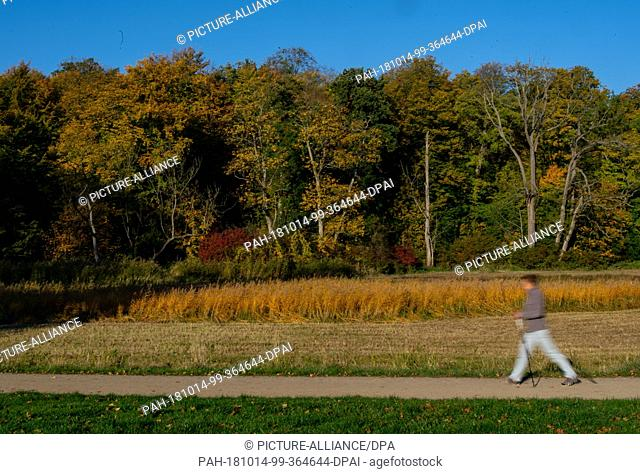 14 October 2018, Hamburg: A jogger walks through the autumnal Jenischpark. Photo: Axel Heimken/dpa. - Hamburg/Hamburg/Germany